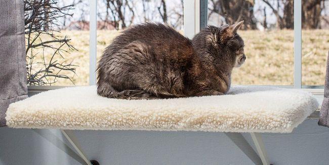 kat sit in die venster