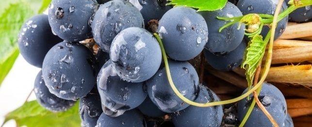 Is druiwe en rosyne regtig giftig vir honde?