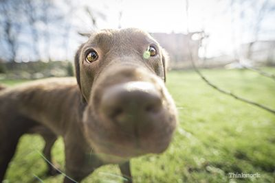 hond neus