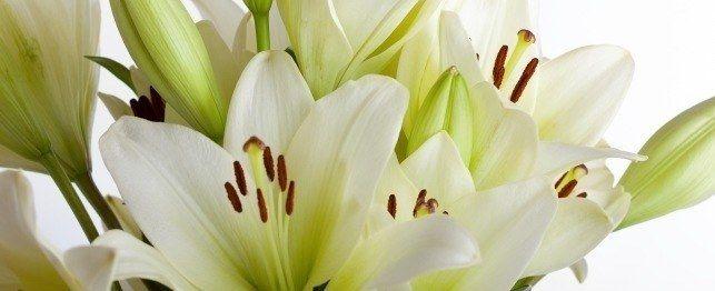 Easter lelies - nie net `n mooi blom: giftig vir katte