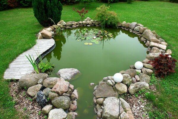 goudvis tuin dam