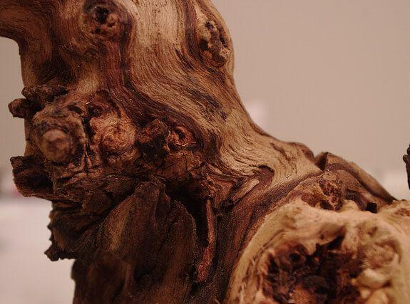 akwarium Driftwood
