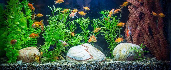 Ttropical varswater akwarium met visse