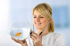 Vrou speels hou `n stetoskoop om haar goudvis bak