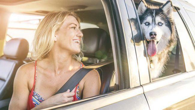 Vrou in die motor met hond