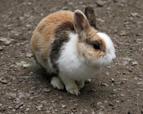 Hoe om te weet as my Rabbit het `n koors