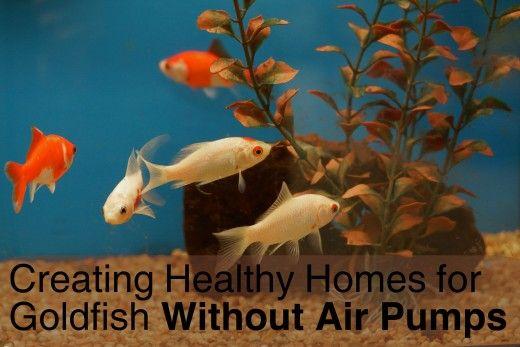 Goeie akwarium plante is die sleutel tot die skep van `n gesonde omgewing vir goudvis wanneer daar isn` title=