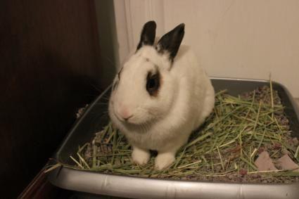 Bunny in litterbox