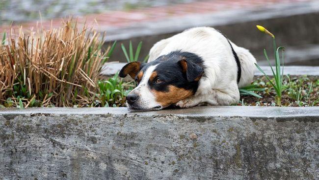 Eensaam en hartseer hawelose hond lê op die straat