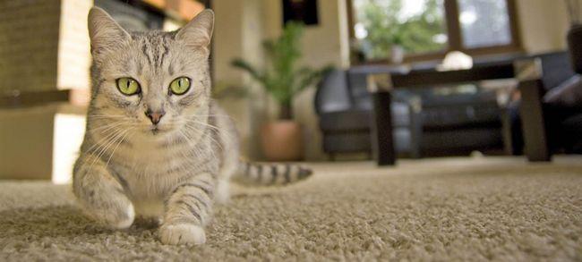 kat in die woonkamer
