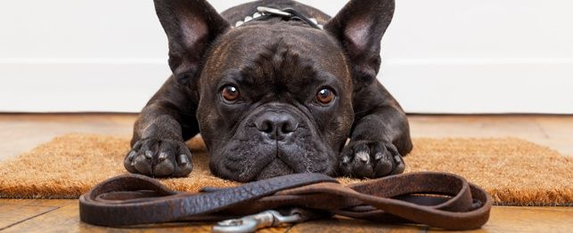 Sit! Bly! Lees! Ons 5 gunsteling opleiding tools vir honde