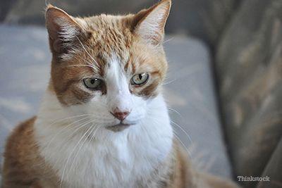 Ouer kat sit op die rusbank